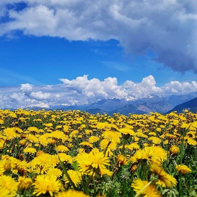 What spring looks like on the mountains around Lake Garda